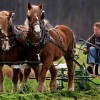Draft Power: Using horses, oxen and mules on the farm