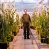 With the Grain: The growing interest in growing local grains