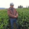 Sakuma Brothers Farms seeks perfect cup of tea