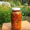 Calendula: How to make infused olive oil and salve