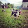 Our Farm: Goodin Family Farm