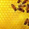 Beekeeping: Two apprentice level courses available
