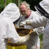 Busy beekeeper: Michael Jaross shares experiences, healthy hive tips