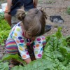 Spring Break camps available through Common Threads Farm