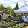 Plant, tree sales on the way