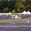 Get Going: Lavender fields, cider and mead, and more