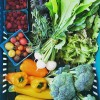 Local growers ready for season's CSA programs