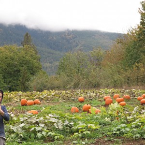 FALL FUN: Local pumpkin patches and festivals