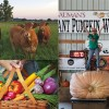 Country Living Expo returns Jan. 25; 175 classes available to choose from