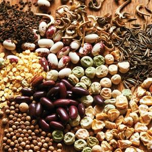 SEEDS: Local, regional seed companies ready for season