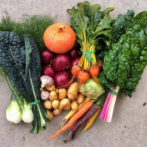 Local growers ready for season's CSA programs