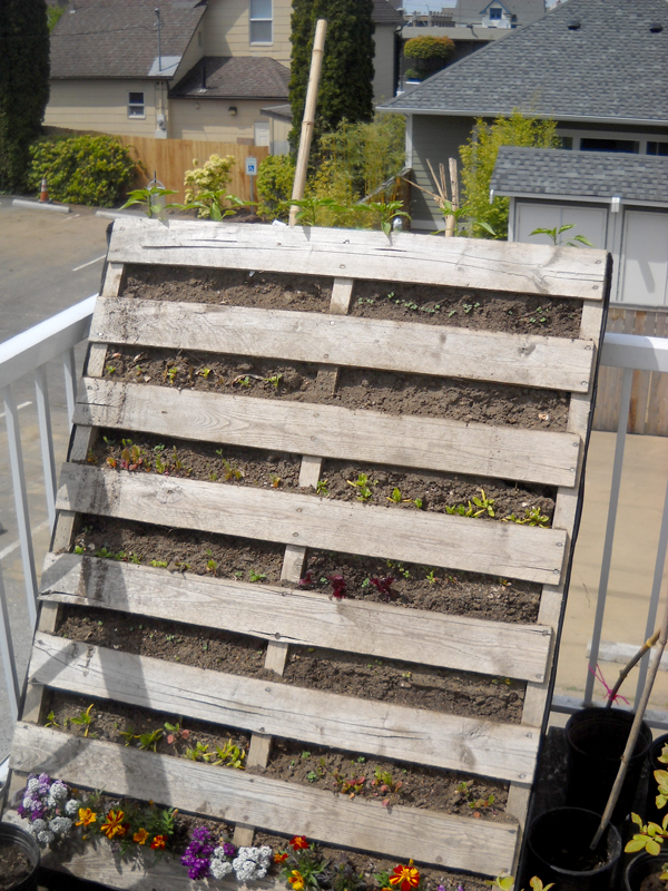 Pallet Projects Reuse Every Inch Of Space Grow Northwest