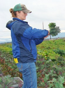 Courtney Blodgett, who served in the U.S. Army in Iraq, picks kale at the farm. PHOTO BY BECCA SCHWARZ COLE