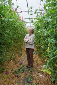 Diane Szukovathy and sweet peas at Jello Mold Farm in Mount Vernon. PHOTO BY JESSAMYN TUTTLE