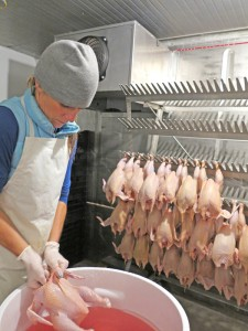 Anna Martin, co-owner of Osprey Hill Farm and its new sister business Osprey Hill Butchery, does a final cleaning for quality control. Once the birds are butchered and cleaned, they are immediately placed in an ice water bath, and moved to the large walk-in cooler inside Osprey Hill Butchery's processing unit. The rack in the background holds 250 birds. PHOTO BY BECCA SCHWARZ COLE