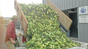 Agricultural Programs Coordinator Max Morange unloads corn for the food bank.  PHOTO COURTESY OF MIKE COHEN