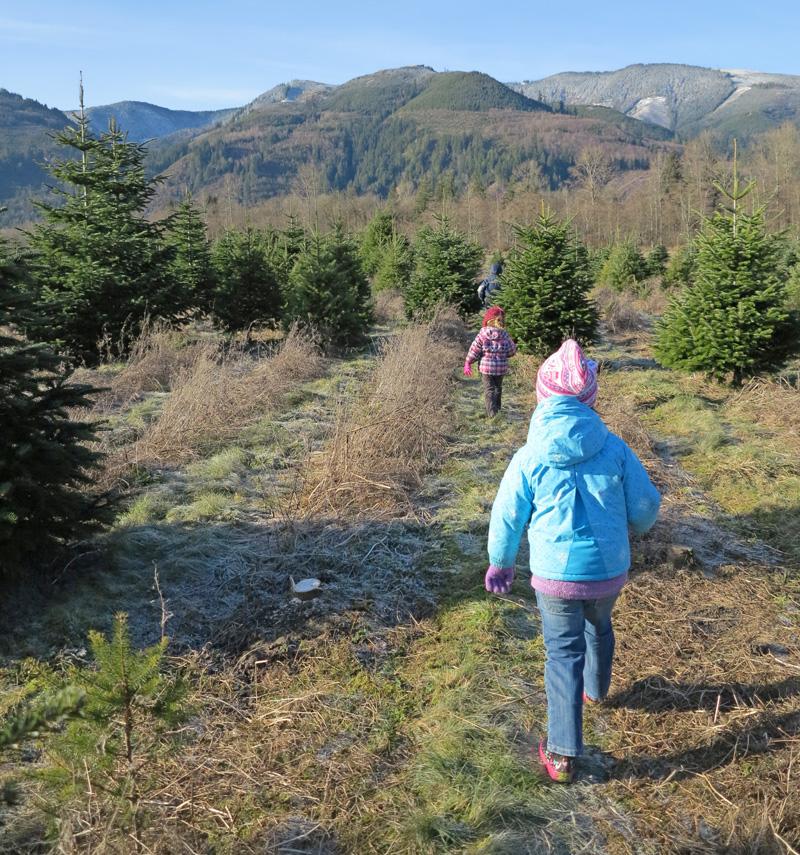Tis the season for a Christmas tree trek - Grow Northwest