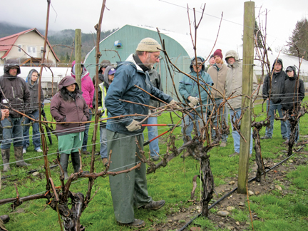 Growing Grapes In The Northwest Grow Northwest