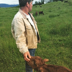 Vern Dykstra, who started raising grass-fed beef over 10 years ago, checks on the cattle, and visits with a young calf. COURTESY PHOTO