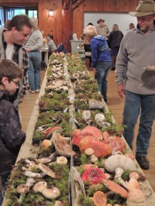 At the annual Wild Mushroom Show presented by the Snohomish County Mycological Society (SCMS). PHOTO BY BILL PIERCE