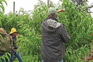 Workshop attendees learn about fruit tree varieties and care at Cloud Mountain Farm Center. COURTESY PHOTO