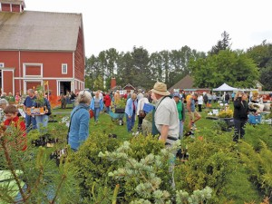 Lots available at the Whatcom Master Gardener sale at Hovander Park, this year held Saturday, May 12. COURTESY PHOTO