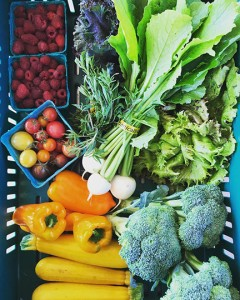Tis the season to be thinking about seasonal farm shares, like this weekly box from Viva Farms during the summer months. PHOTO BY VIVA FARMS