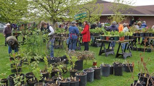 everson garden club plant sale web