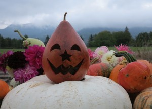 Happy Fall announcement