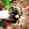 Bee basics: On pollination