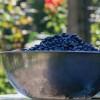 U-Pick berry farms: Where to go this season