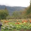 FALL FUN: Local pumpkin patches and festivals