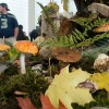 Mushrooms species on display at local shows